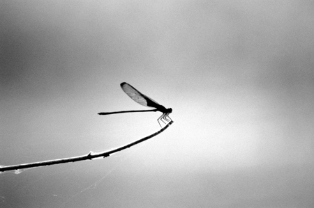 A dragonfly at Hornsby Bend