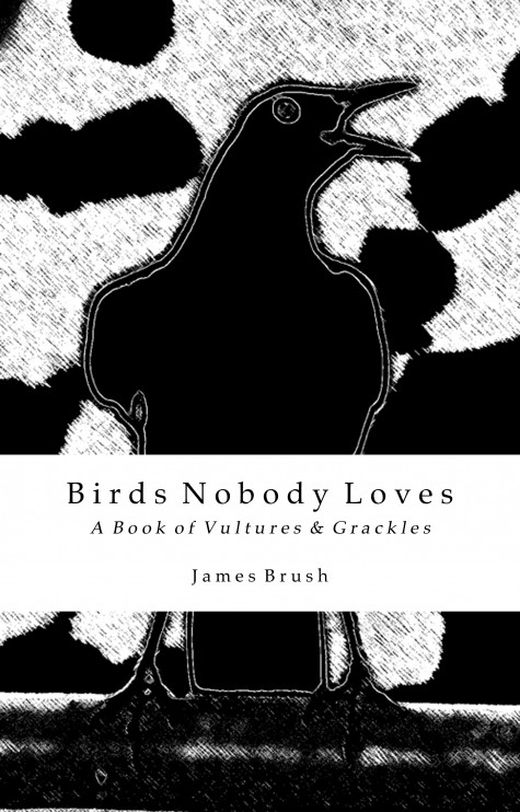 BIrds Nobody Loves cover