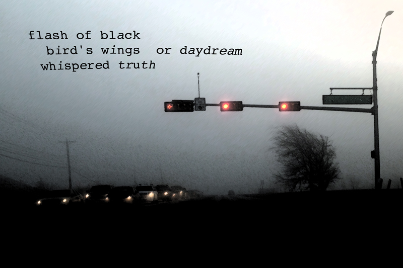 flash of black / bird's wings or daydream / whispered truth